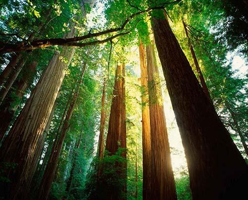 plant a tree jani king gulf coast